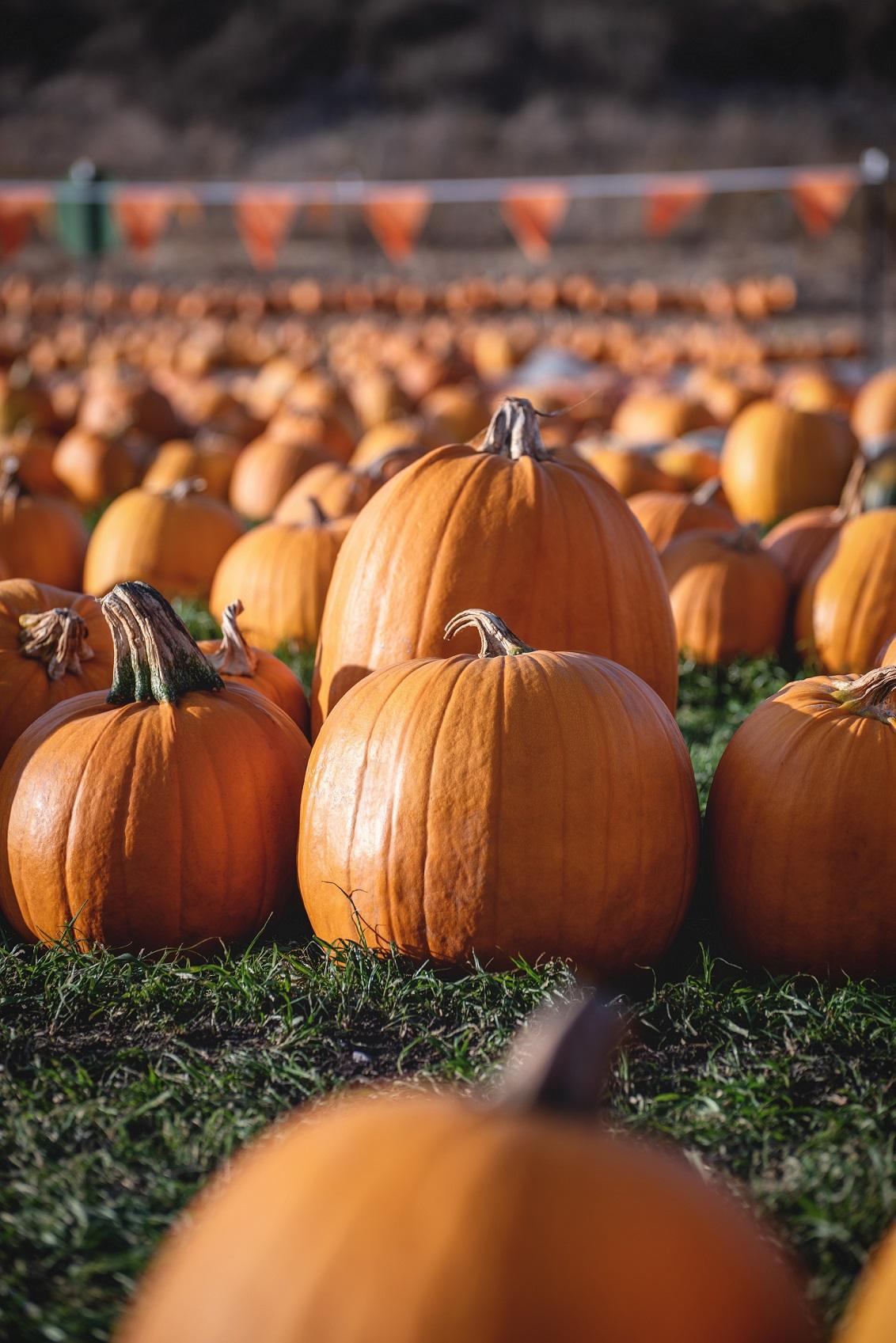 Cincinnatis Best Pumpkin Patches for Fall 2021 1
